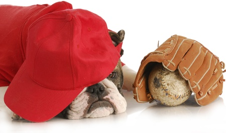 sports hound - english bulldog wearing red shirt and hat over eyes with baseball and glove on white background Stock Photo - 9226570