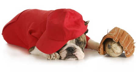 sports hound - english bulldog wearing red shirt and hat with baseball and glove on white background Stock Photo - 9378012