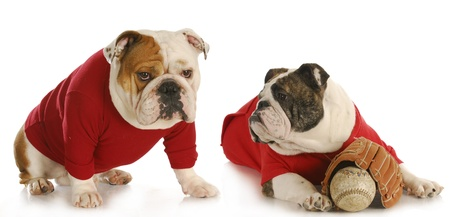 dog baseball teamates - two english bulldogs wearing red shirts with baseball and glove Stock Photo - 9389439