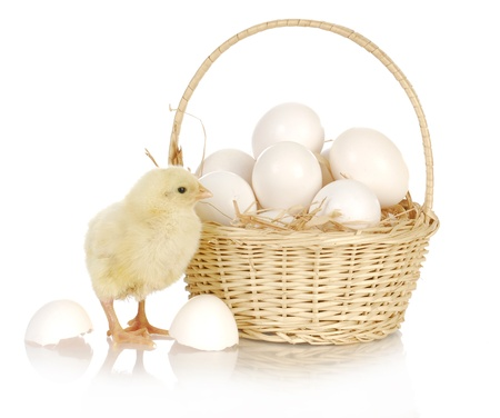 basket of eggs with newborn chick standing beside on white background photo