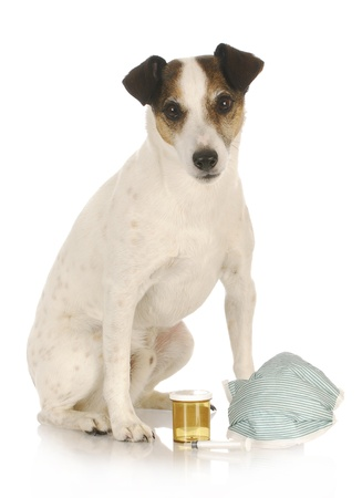 veterinary care - jack russel terrier sitting with medical supplies photo