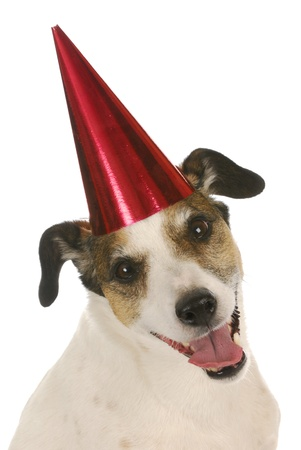 happy birthday dog - jack russel terrier wearing red birthday hat on white background Stock Photo - 9623043