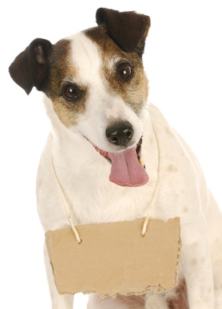 sad dog: dog with a message - jack russel terrier with a blank sign around his neck Stock Photo