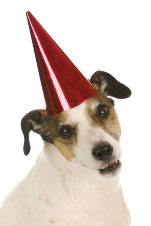 party dog - jack russel terrier wearing red party hat and silly expression photo