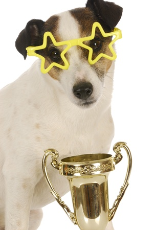champion dog - jack russel terrier wearing star shaped glasses sitting with trophy photo