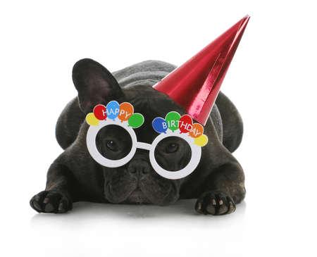 frenchie: birthday dog - french bulldog wearing happy birthday glasses and hat on white background