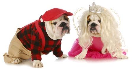 barrettes: coppia cane - coppia bulldog inglese maschili e femminili su sfondo bianco