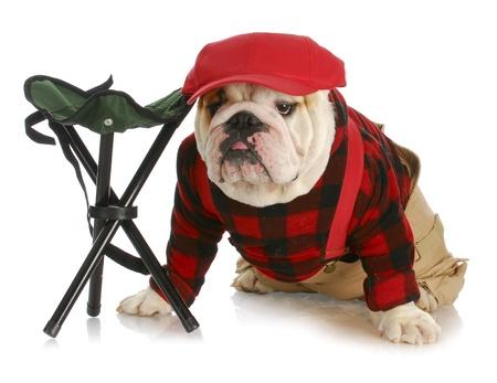 cap hunting dog: hunting dog - english bulldog dressed like a hunter wearing red baseball cap sitting beside hunting stool Stock Photo