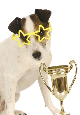 champion dog - jack russell terrier wearing star shaped glasses sitting beside trophy photo