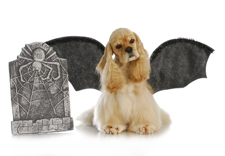 male costume: halloween dog - cocker spaniel wearing bat wings sitting beside tomb stone on white background