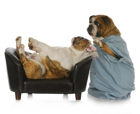psychotherapy: veterinary care - english bulldog doctor tending to sick bulldog laying on leather couch with reflecion on white background