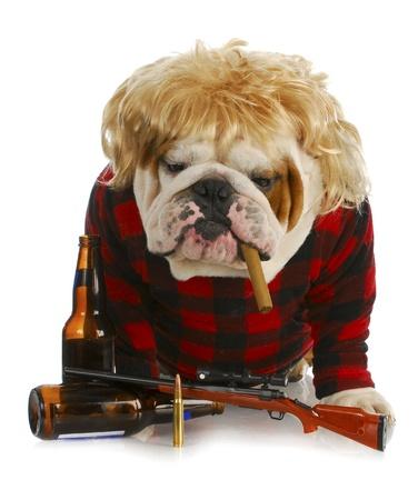 smoking a cigar: redneck dog - english bulldog redneck smoking cigar and sitting beside gun and beer bottles  Stock Photo