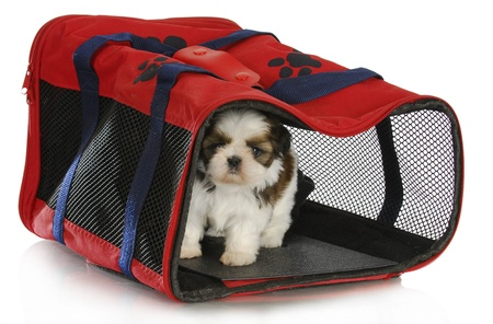 puppy carrier - shih tzu puppy in a pet carrier on white background - 6 weeks old photo