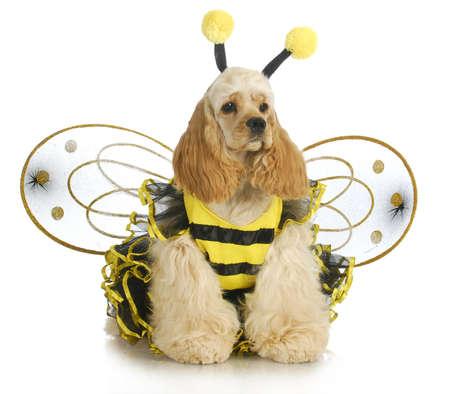 english cocker spaniel: dog dressed like a bee - american cocker spaniel wearing a bumble bee costume