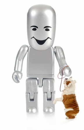 trained dog - robot person with english bulldog begging at feet photo