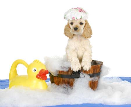 tub: la hora del ba�o del perrito - perrito cocker spaniel americano que tiene un ba�o - 8 semanas de edad Foto de archivo