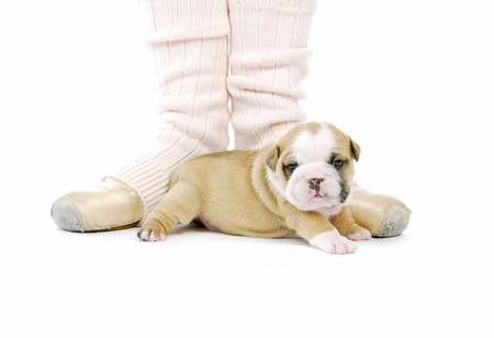 bulldog puppy: ballerina and newborn puppy - english bulldog puppy - 4 weeks old