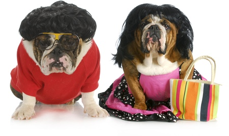 barrettes: dog husband and wife - english man and woman wearing clothing isolated on white background