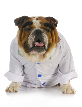 wrinkled brow: veterinarian - english dressed up like a vet with reflection on white background
