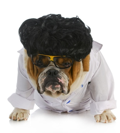bull dog: veterinary care - english bulldog doctor on white background Stock Photo