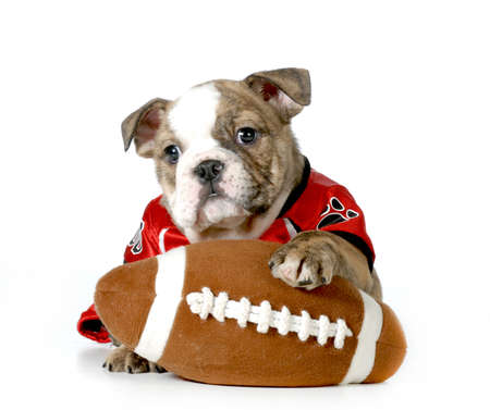 sportovní pes