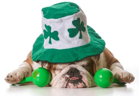 animal st  patricks day: English bulldog wearing St Patricks Day hat isolated on white  Stock Photo