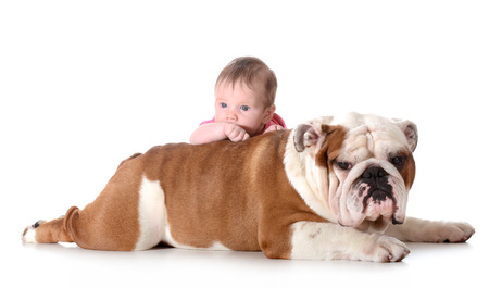 english girl: baby and dog - 3 month old baby with 4 year old english bulldog isolated on white background