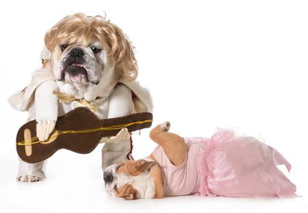 dog rock: english bulldog wearing rock star costume with fan fainting at his feet