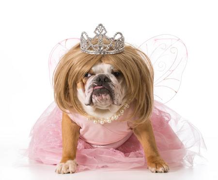 pampered pets: english bulldog wearing blond wig and princess costume
