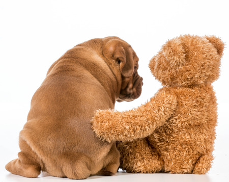 best friends - dog and teddy bear with arms around each other photo