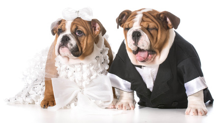 dog bride and groom puppies Stock Photo - 28074882
