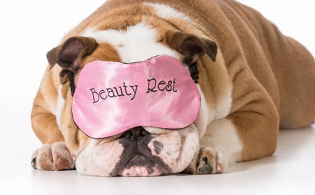 english bulldog wearing beauty rest eye mask sleeping photo