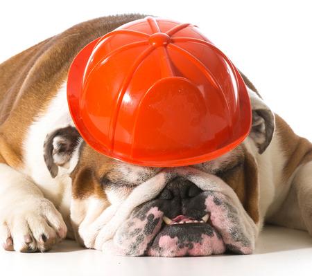 Favori Chien Portant L'envers - Bulldog Anglais Sur Le Dos Dormir Isolé  NH51