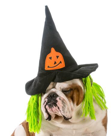english bulldog wearing witch hat photo