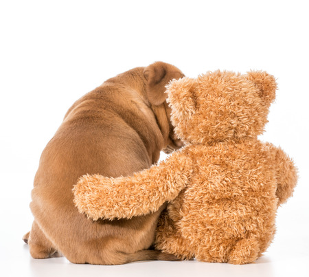 stuffed animals: dog and teddy bear with their arms around each other