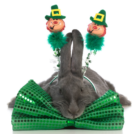 irish easter: st patricks day bunny wearing green bowtie on white background Stock Photo