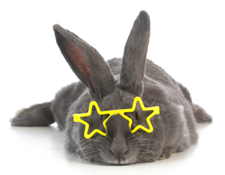 famous bunny - rabbit wearing star glasses on white background