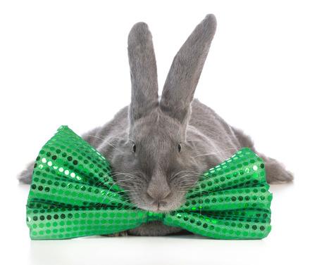 giant flemish bunny wearing big green bowtie on white background photo