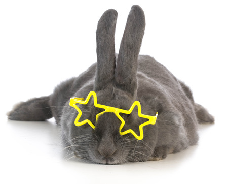 fluffy ears: famous bunny - rabbit wearing star glasses on white background