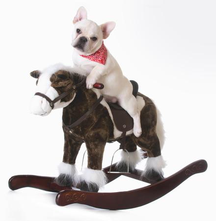 frenchie: dog riding a rocking horse - french bulldog puppy Stock Photo