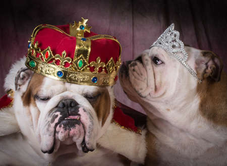like english: royal couple - two english bulldogs dressed up like a king and queen Stock Photo