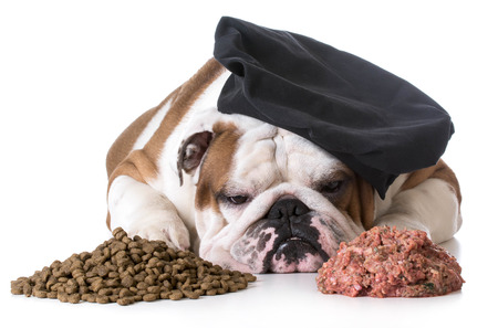 kibble: dog food debate - bulldog chef laying between pile of kibble and raw dog food