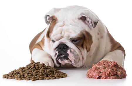 kibble: dog choosing kibble over raw - bulldog