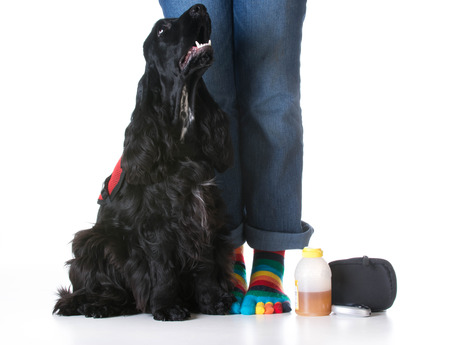 trained: service dog - diabetic trained service dog sitting beside owner Stock Photo