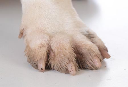 pieds sales: pieds de chiens sales ou patte sur blanc