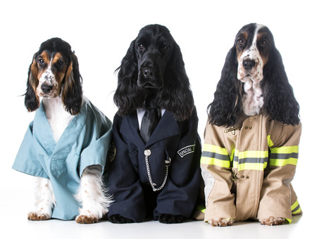 like english: first responders - english cocker spaniels dressed up like a doctor, police officer and a fire fighter on white background