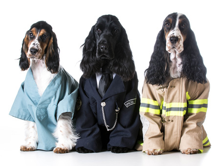 dog costume: first responders - english cocker spaniels dressed up like a doctor, police officer and a fire fighter on white background