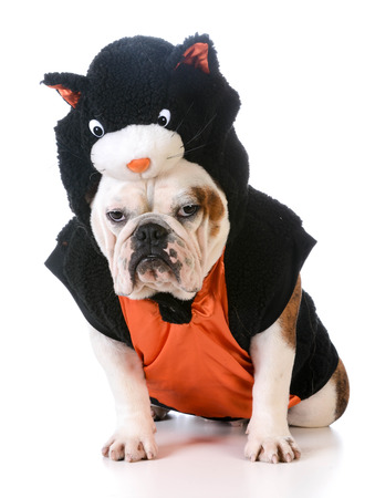 dog in costume: dog wearing cat costume on white background