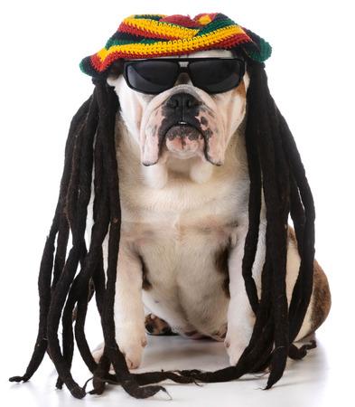 reggae: drôle de chien avec des dreadlocks perruque sur fond blanc