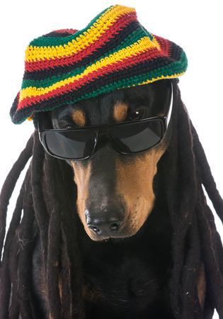 dog in costume - doberman dressed with dreadlocks on white background